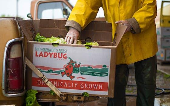 LADYBUG Farms