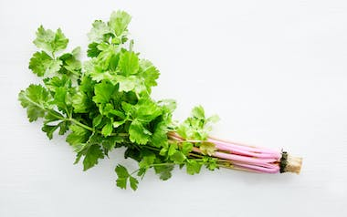 Aquaponic Pink Chinese Celery