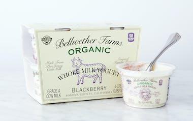 Organic Blackberry Whole Milk Yogurt Cups