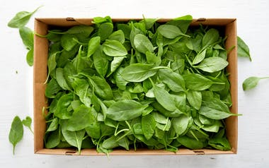 Bulk Organic Baby Spinach