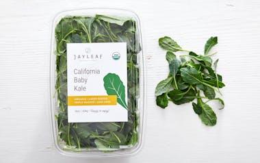 Pre-Washed Organic Baby Dino Kale