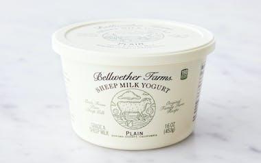 Plain Sheep's Milk Yogurt