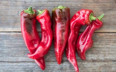 Organic Corno di Toro Peppers