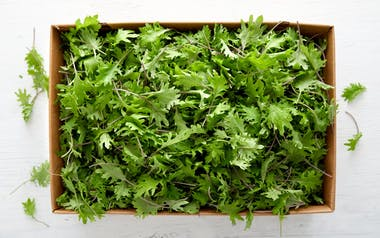 Bulk Organic Baby Kale