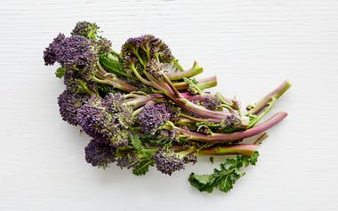 Organic Purple Baby Broccoli