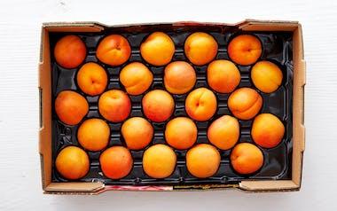 Half Flat of Organic Golden Sweet Apricots
