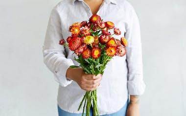 Organic Strawflower