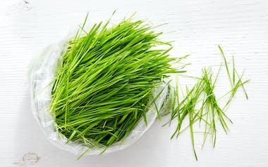 Bulk Organic Cut Wheatgrass