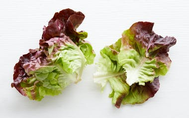 Organic Red Butter Lettuce