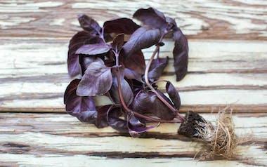 Aquaponic Living Purple Opal Basil