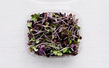 Organic Micro Radish
