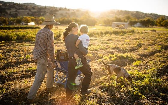 Sun Tracker Farm