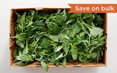 Bulk Pre-Washed Organic Baby Dino Kale