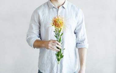 Orange Pincushion Protea