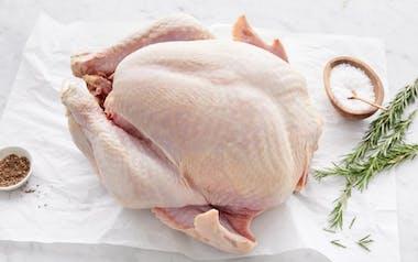 Broad Breasted Turkey (8-10 lb)