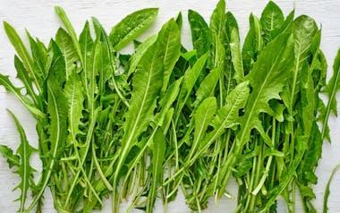 Organic Dandelion Greens