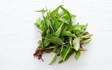 Organic Thai Basil