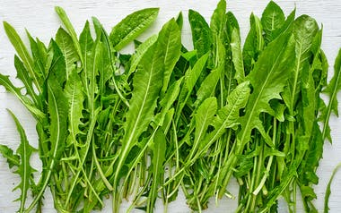 Aquaponic Dandelion Greens