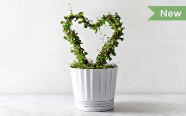 Heart Ring Vine