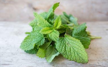Organic Pinch of Mint