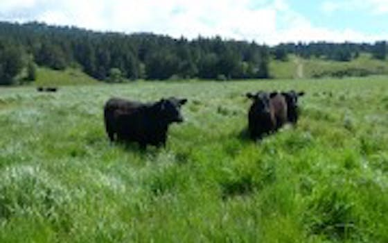 KCM Lost Coast Pasture Finished Beef