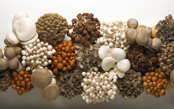 Gourmet Mushrooms Inc.