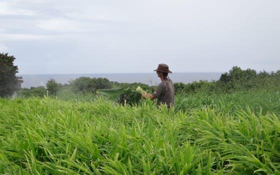 Kolo Kai Organic Farm