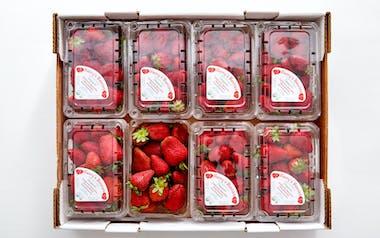 Flat of Harry's Berries Organic Gaviota Strawberries