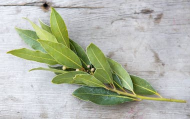 Organic Culinary Bay Leaves