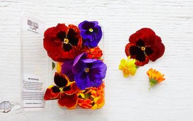Organic Edible Flowers