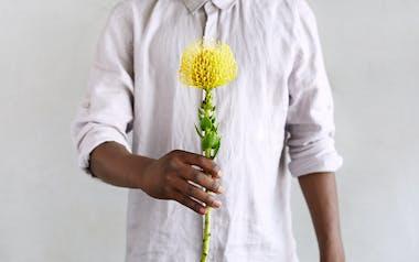 Yellow Pincushion Protea